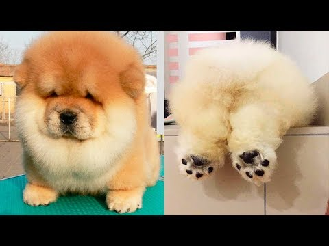 THE CUTEST DOG BREEDS In The World Mp3