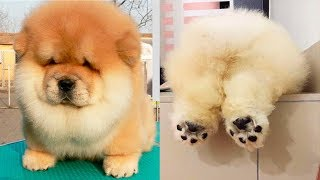 THE CUTEST DOG BREEDS In The World - Video Youtube