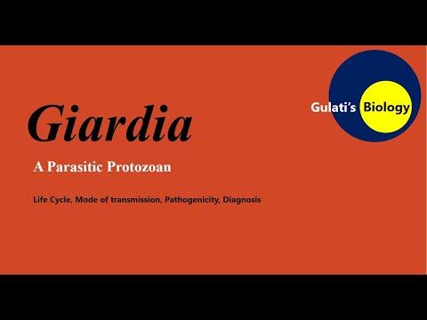 Ick protozoan paraziták