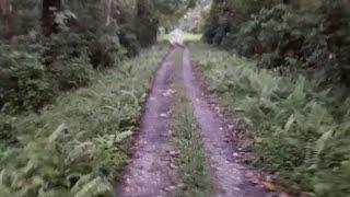 Very Dengerious Car Safari Dense Forests Of Chilapata - Gorumara - Buxa - Jayanti