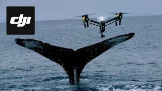 DJI Stories - Snotbot: Pushing the Frontiers of Whale Research | Kholo.pk