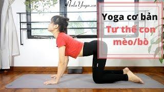 Yoga Cơ Bản Tại Nhà - Con Mèo và Con Bò - Trị Đau Lưng Hiệu Quả