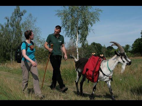 Mit Ziegen im Oderbruch wandern