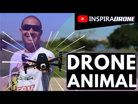 Drone Dragonfly KK13 - Review em PORTUGUÊS-BR