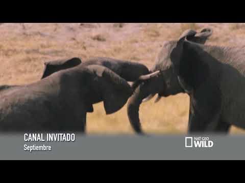 Nat Geo Wild canal invitado de septiembre en telecable