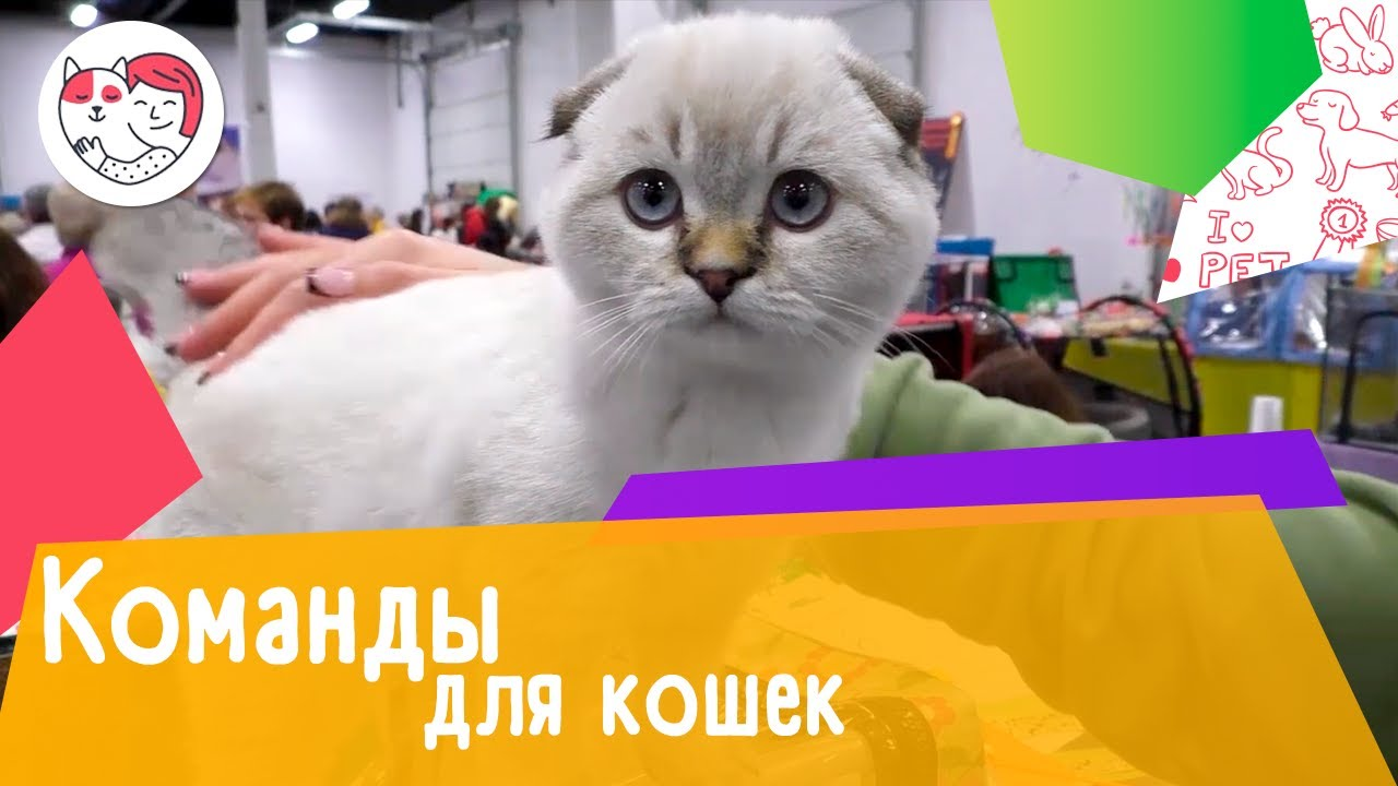 5 команд, которым можно обучить кошку
