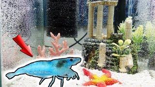 ENDLICH 😍! Meine blauen BABY GARNELEN sind da 💙! - Einrichten des Aquariums 🌊!