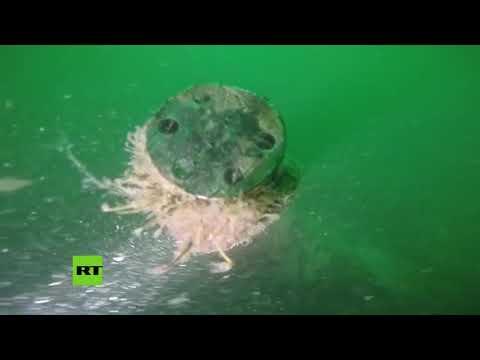 Encuentran un submarino alemán de la I Guerra Mundial en las costas de Bélgica
