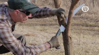Ask an Arborist: The ABC's of Pruning