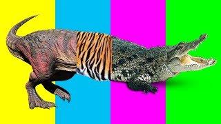 Wrong Body Zoo Animals Dinasour T rex Tiger Crocodile Nursery Rhymes Farm Animals For Kids Learn