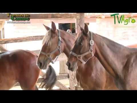 Cómo Alimentar a los Caballos de manera Balanceada - TvAgro por Juan Gonzalo Angel