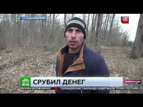 За незаконную вырубку деревьев выписали штраф 6 мл. рублей