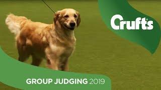 Gundog Group Judging and Presentation | Crufts 2019