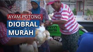 Ayam Potong Diobral Murah hingga Peternak Musnahkan Anak Ayam, Peternak: Tolong Kami Satgas Pangan