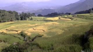 preview picture of video 'Rice terraces in Tana Toraja'