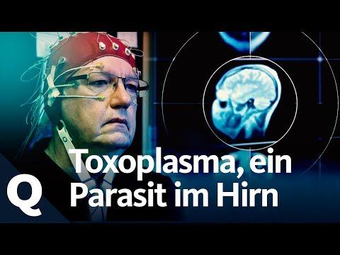 Das Medikament von den Parasiten das Volksmittel