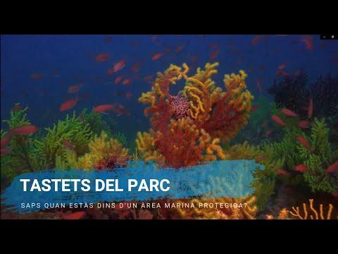 Visualiza este vídeo para informarte sobre el protocolo a seguir dentro del Parque Natural...