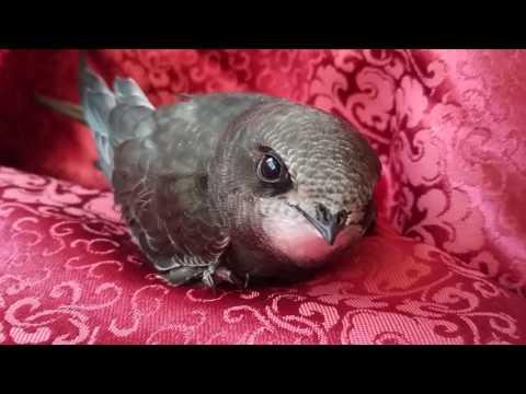 Красивая птичка смотрит на тебя