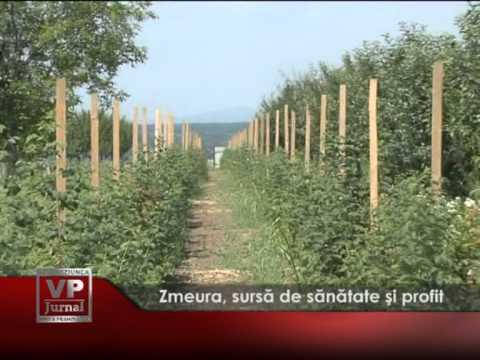 (Promo) Primarul comunei Bănești, azi la VP TV, în Prim Plan!