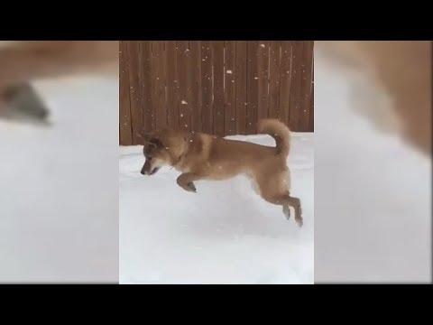 Собачий восторг