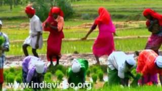 Kambara Nritham � an agrarian ritual dance from Wayanad