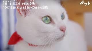 猫侍玉之丞ときどき春馬CMAbemaTV