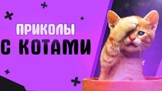 Приколы с котами - смешные коты и кошки 2018 | ТЕСТ НА ПСИХИКУ, ПРОБУЙ НЕ СМЕЯТЬСЯ!