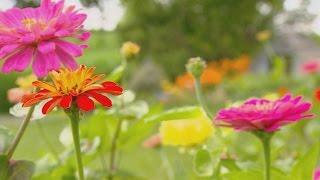 Miss Effies Edible Flower Farm | Iowa Ingredient