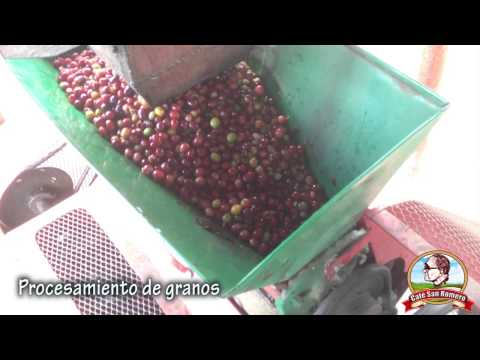 Procesamiento de granos - Café San Romero