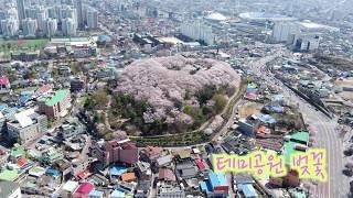 테미공원 벚꽃 이미지