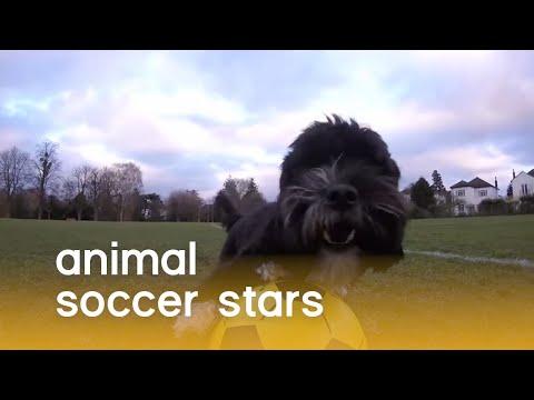 כוכבי כדורגל ממלכת הטבע -סרטון חמוד ומשעשע במיוחד!