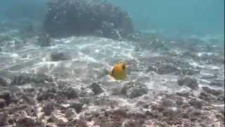 preview picture of video 'La Réunion. Lagon de l'Ermitage le 5 mars 2013 d'