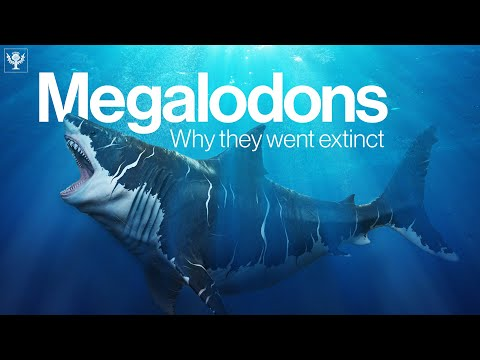 The Truth Behind Why Megalodon Went Extinct
