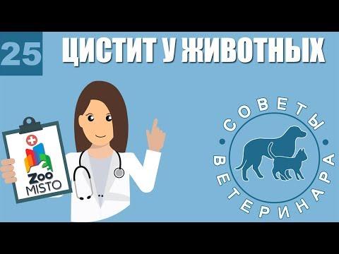 Цистит у домашних животных | Как лечить Цистит | Симптомы и профилактика цистита | Советы Ветеринара