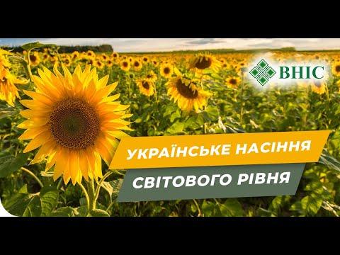 Украинские семена с именем. Кто такие ВНИС?