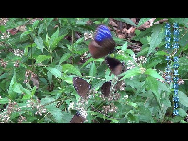 <html> <body> Film for Purple Butterfly2019-11-13 </body> </html>
