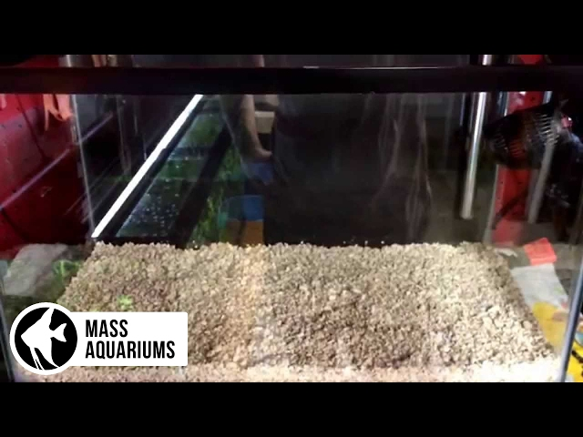 How to set up a 10 gallon reef tank (start up) Day 1