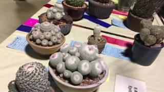 LA Cactus Show August 11, 2018 2