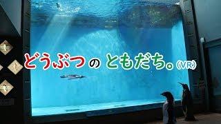 動物紹介型Vtuberどうぶつのともだち~長崎ペンギン水族館~part2~名無しのアデリー