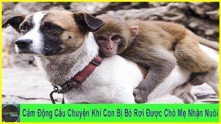 Cảm Động Chú Khỉ Con Bị Bỏ Rơi Được Chó Mẹ Nhận Nuôi