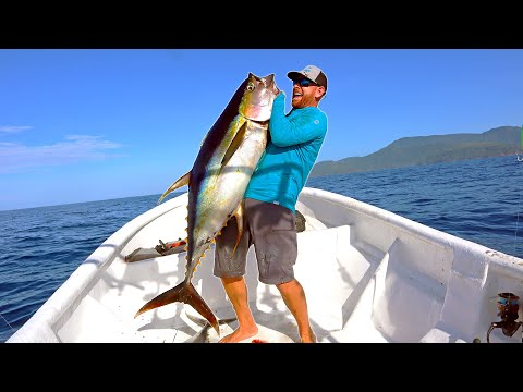 Using DOLPHINS to Catch MASSIVE Tuna (CATCH & COOK) - Offshore Fishing
