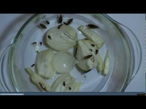 Как избавиться от тараканов в квартире How-To Kill a Cockroach
