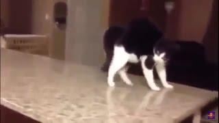 Самые смешные приколы с котами