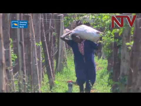 UN launches 26 billion shillings fund to stimulate agriculture in Northern Uganda