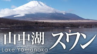 絶景空撮 山中湖のスワン - Aerial view of swans at Lake Yamanaka
