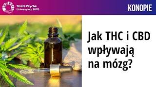 Jak THC i CBD wpływają na mózg? – Prof. dr hab. Katarzyna Starowicz-Bubak, Alicja Binkowska