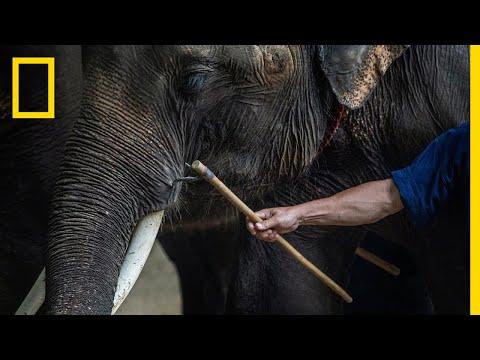 Inside the Dark World of Captive Wildlife Tourism | National Geographic