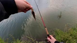 Отводной поводок ловля на озере