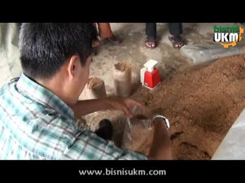 Video Pelatihan Budidaya Jamur Tiram Bersama Bisnis UKM