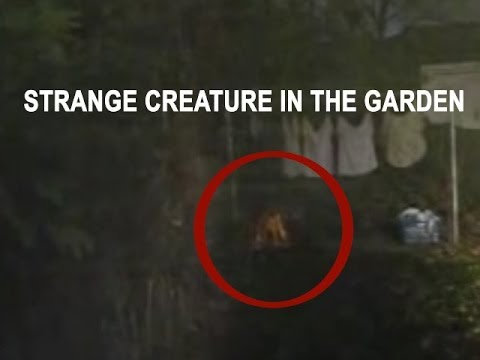 Real alien caught on tape? is this an alien or what? Real ufo sightings and aliens caught on tape